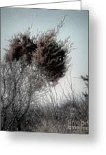 Winter Cedar Greeting Card