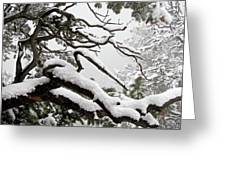 Winter Comes To Colorado Greeting Card