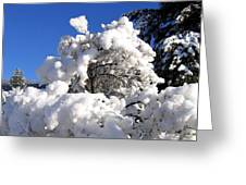 Winter Cotton Greeting Card