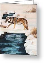 Winter Coyote Greeting Card