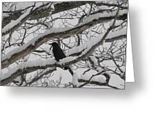 Winter Crow Greeting Card