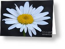 Winter Daisy Greeting Card