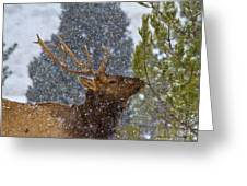 Winter Delicacies Greeting Card