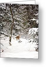 Winter Doe In The Upper Peninsula Greeting Card