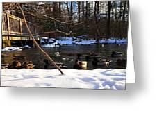 Winter Ducks Greeting Card