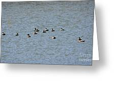 Winter Ducks Swimming Away  Greeting Card