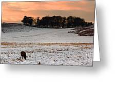 Winter Dusk At Bradgate Park Greeting Card