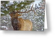 Winter Edibles Greeting Card
