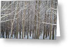 Winter Embrace Greeting Card