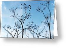 Winter Fennel Two Greeting Card