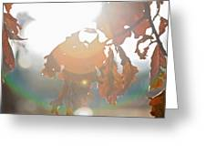 Winter Flare Greeting Card