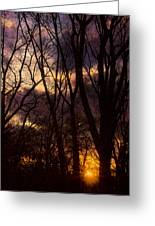Winter Forest Sunrise Greeting Card