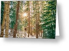 Winter Forest Sunshine Greeting Card