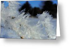 Winter Frost 3 Greeting Card