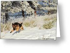 Winter Fun ... Montana Art Photo Greeting Card