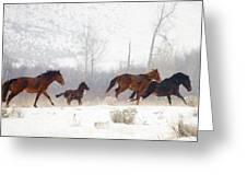 Winter Gallop Greeting Card