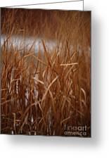 Winter Grass - 1 Greeting Card