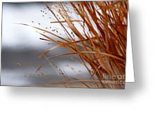 Winter Grass - 2 Greeting Card