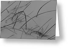 Winter Grass Greeting Card