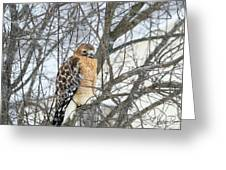 Winter Hawk Greeting Card