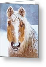Winter Horse Portrait Greeting Card