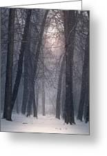 Winter Hush Greeting Card