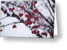 Winter Ice Berries Greeting Card