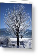 Winter In Innsbruck Greeting Card