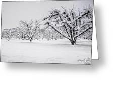 Winter In The Orchard Greeting Card