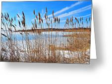 Winter In The Salt Marsh Greeting Card