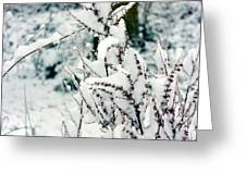 Winter Is Comming  Greeting Card