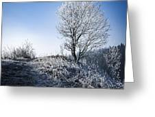 Winter Landscape Of Trees Covered With Frost Greeting Card