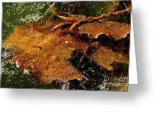 Winter Leaves In Ice Greeting Card