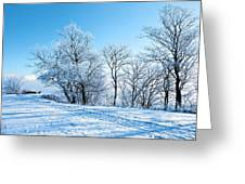 Winter Lights Greeting Card by Svetlana Sewell