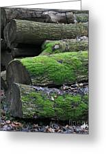 Winter Log Mossy Patterns Greeting Card