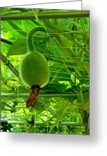 Winter Melon In Garden 3 Greeting Card