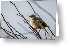 Winter Mockingbird Greeting Card