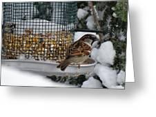 Winter Mornings Greeting Card