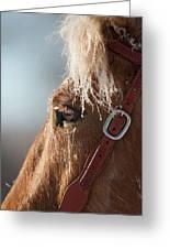 Winter Mustang Eye Greeting Card