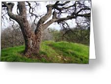 Winter Oak Greeting Card