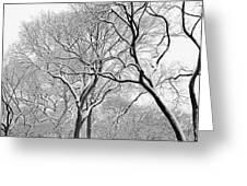 Winter Panorama  Greeting Card