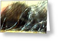 Winter Passage Greeting Card