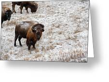 Winter Pasture Greeting Card