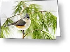 Winter Pine Bird Greeting Card