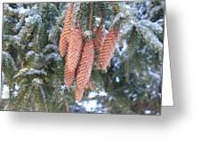 Winter Pine Cones Greeting Card