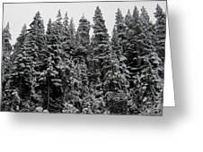 Winter Pine Spires Greeting Card