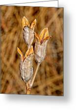 Winter Pods Greeting Card
