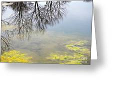 Winter Pond Reflections Greeting Card