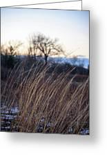 Winter Prairie Grass At Dusk Greeting Card