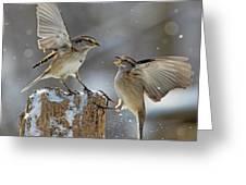 Winter Quarrel Greeting Card